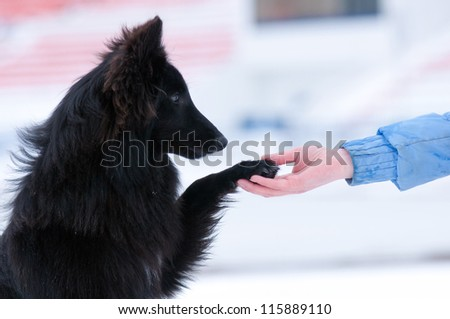Pretty young black dog gives paw on hand