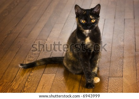 Pretty young cat sitting on a wooden floor.
