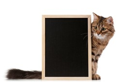 Pretty young cat with a blackboard over white background