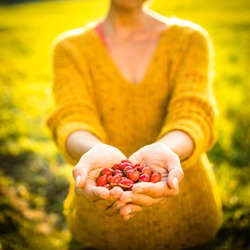 Pretty, young woman collecting rosehip fruit in autumn nature