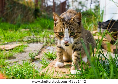 Preying cat