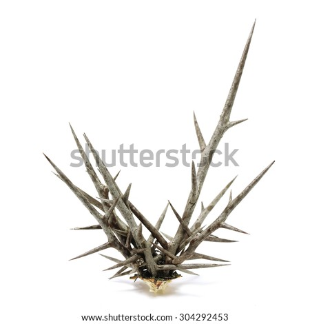 prickly branches of a plant isolated on white background Сток-фото ©