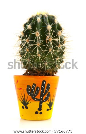 Prickly cactus in decorated flower pot isolated over white