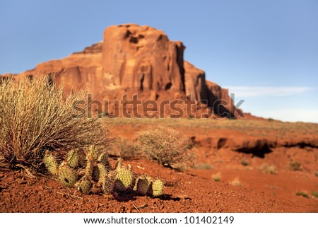 Prickly pear cactus and indigenous plants growing in the desert. Monument Valley, Utah, USA. Intentional shallow depth of field.