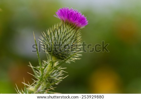 prickly plant with vibrant...