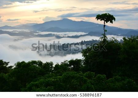 Primary Rainforest sunrise scenery in lowland Danum Valley, Sabah Borneo, Malaysia.  One of the few primary rainforest around the globe.