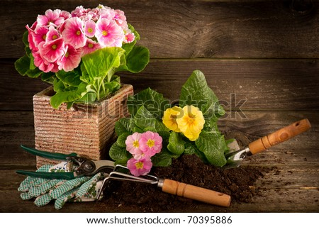 primrose and garden utensil on wood background