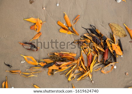pristine beach with tropical leaf litter on the shoreline and surf