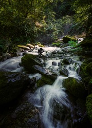 Pristine stream in forest. River Sesin in the Nature Park As Fragas do Eume in Galicia, Spain.
