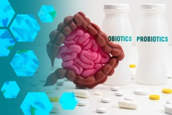 Probiotic bacteria. Useful microorganisms for intestines. Human stomach next to probiotics. Concept - treatment of intestinal diseases. Dietary supplements for the gastrointestinal tract.