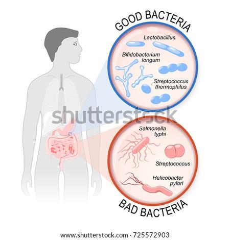 probiotics. gut flora  good ...