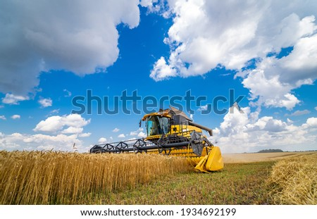 Process of gathering ripe crop from the fields. Special technic in field. Modern machinery in gold wheat. Cereal or wheat gathering. Heavy machinery. Сток-фото ©