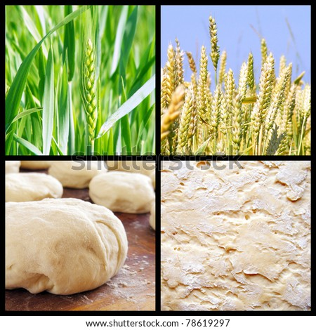 Process of growing bread