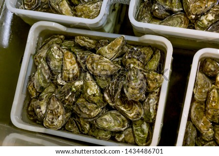 Process of oysters washing, oysters in boxes. Oysters washing before selling. #1434486701