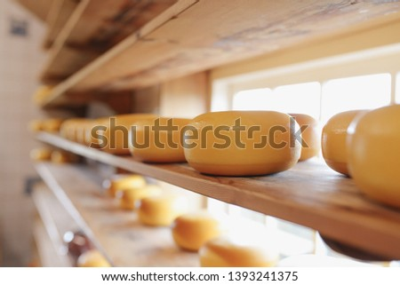 Process of producing in dairy industry - fresh produced cheese in a cheesery on the shelf (for selling) #1393241375