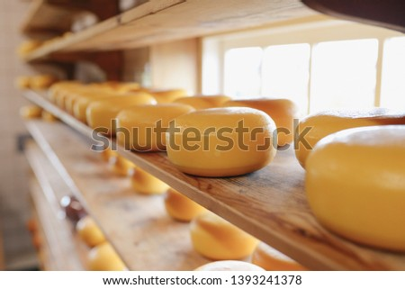Process of producing in dairy industry - fresh produced cheese in a cheesery on the shelf (for selling) #1393241378