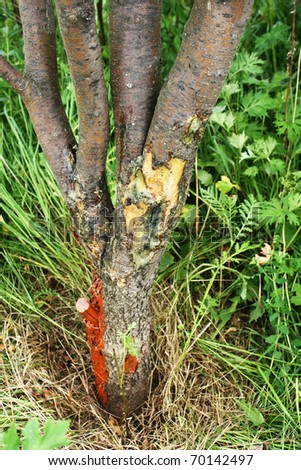 Processing of a sick tree, damage on a tree trunk
