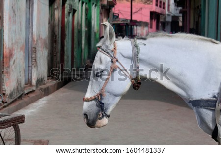 Professional Background with Horse For professional editing