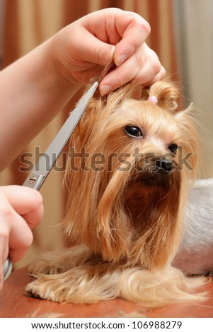 professional care for dog hair