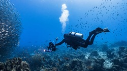 Professional diver / underwater photographer and Bait ball / school of fish in turquoise water of coral reef in Caribbean Sea / Curacao