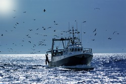 professional fisherboat with many seagulls come back in the harbor