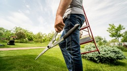 Professional gardener goes to cut trees with garden scissors and ladder