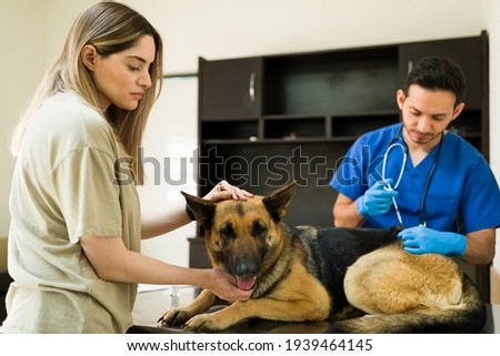 Professional latin veterinarian putting a vaccine and medicine with a syringe to an old dog in the exam table. Sad and worried woman petting and calming down her beautiful dog at the vet clinic ストックフォト ©