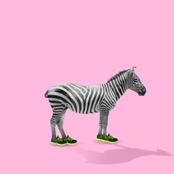 Professional runner. Zebra trying on new sportshoes for run on pink background. Copyspace for your proposal. Modern design. Contemporary artwork, collage. Concept of fashion, beauty, sport, animal.