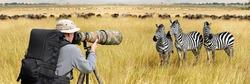 Professional wildlife photographer on safari. Zebra shot