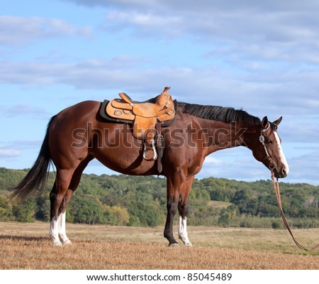 profile image of saddled quarter horse mare in pasture