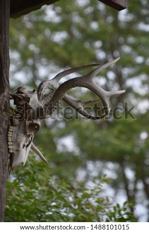Profile of a deer skull with antlers hanging against a leafy background. #1488101015