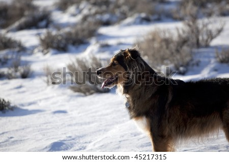 Profile of a dog standing in the snow panting