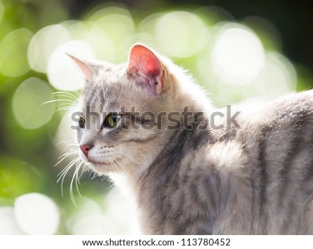 Profile of cat