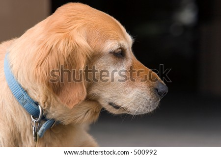 Profile of Dog