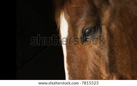profile of horse\'s face close up