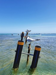 Profile of Royal Terns standing on a post or beach buoy in turquoise augas of the caribbean sea. Idyllic landscape of birds and tropical nature background.