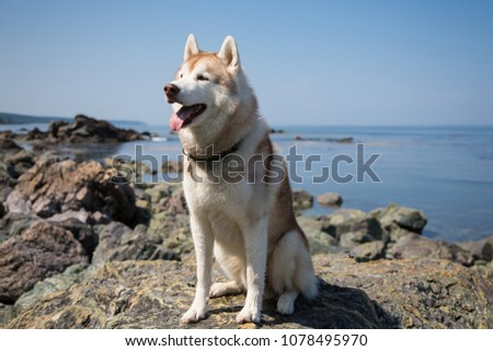 profile portrait of cute dog...