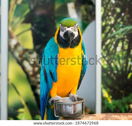 Profile view of a macaw parrot
