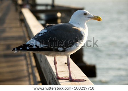 Profile view of seagull taken at Seal Beach. California