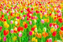 Profusion of tulip blossoms in an ornamental garden, with digital painting effect and light texture, for background or element with motifs of spring, variety, mixture