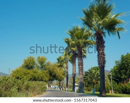 Promenade of the seaside town with palm trees, path along the shore