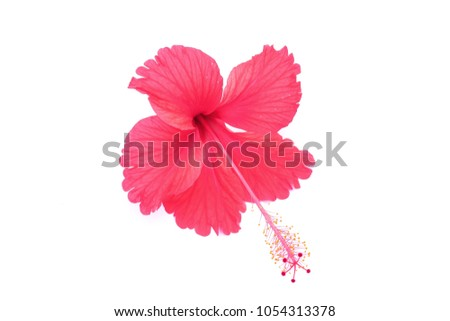 White Hibiscus Flower With Red Center And Red And Pink Stamen Images