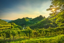 Prosecco Hills, vineyards at sunset. Unesco Site. Farra di Soligo. Veneto, Italy, Europe.