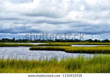 Protected Marshland Cape May, NJ