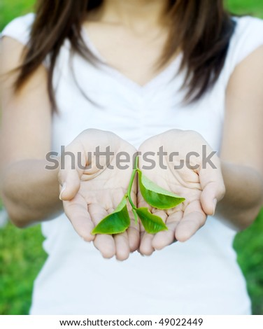 Protecting Hand. Tea leaves on hand with tea farm as background.