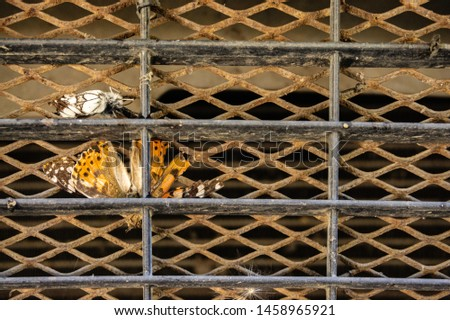 Protective grille in front of a car engine cooling radiator. Butterflies on protective grille cooling radiator. Selective focus. Close-up of butterfly. #1458965921