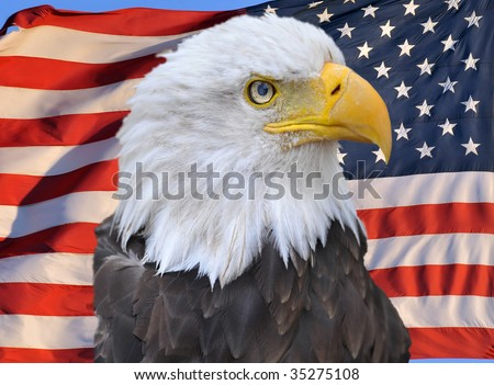 proud american bald eagle superimposed on united states of america flag, stars and stripes, usa