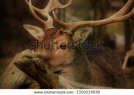 Proud forest dweller deer. #1350219830