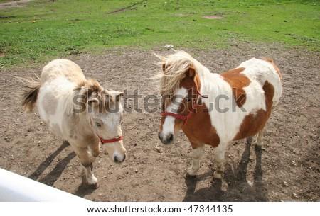 Proud Ponies