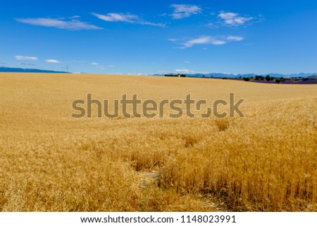 provence france wheat field  #1148023991